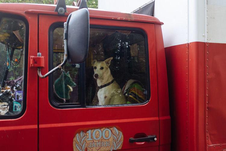 Portrait Of Dog In Red Semi-Truck Seen Through Window