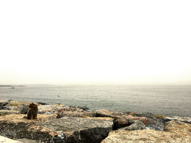 #OldButNewToEyeEm #outfit #OOTD #beautiful #landscape #nature #photography #EyeEmNewHere #photography #cat #cute #love #cat Sky Sea Water Land Beach Scenics - Nature Beauty In Nature Day No People Clear Sky Horizon Horizon Over Water Nature Rock Outdoors Tranquil Scene Tranquility Solid Rock - Object