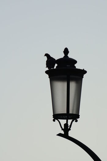 Low angle view of silhouette bird perching on street light