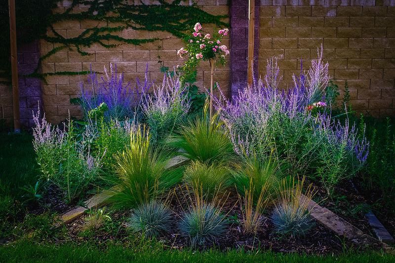 Garden,