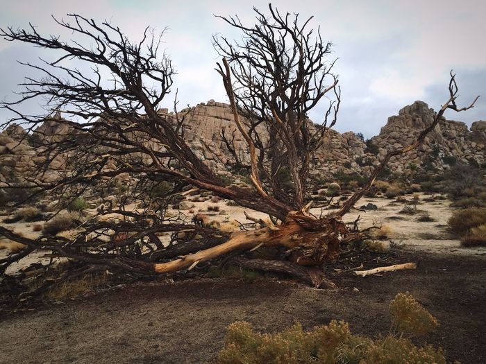 How Do You See Climate Change? Joshua Tree National Park The Hidden Valley / Iphone6 / While you are walking on this land you can smell that somthing was burning recently there. Landscapes With WhiteWall