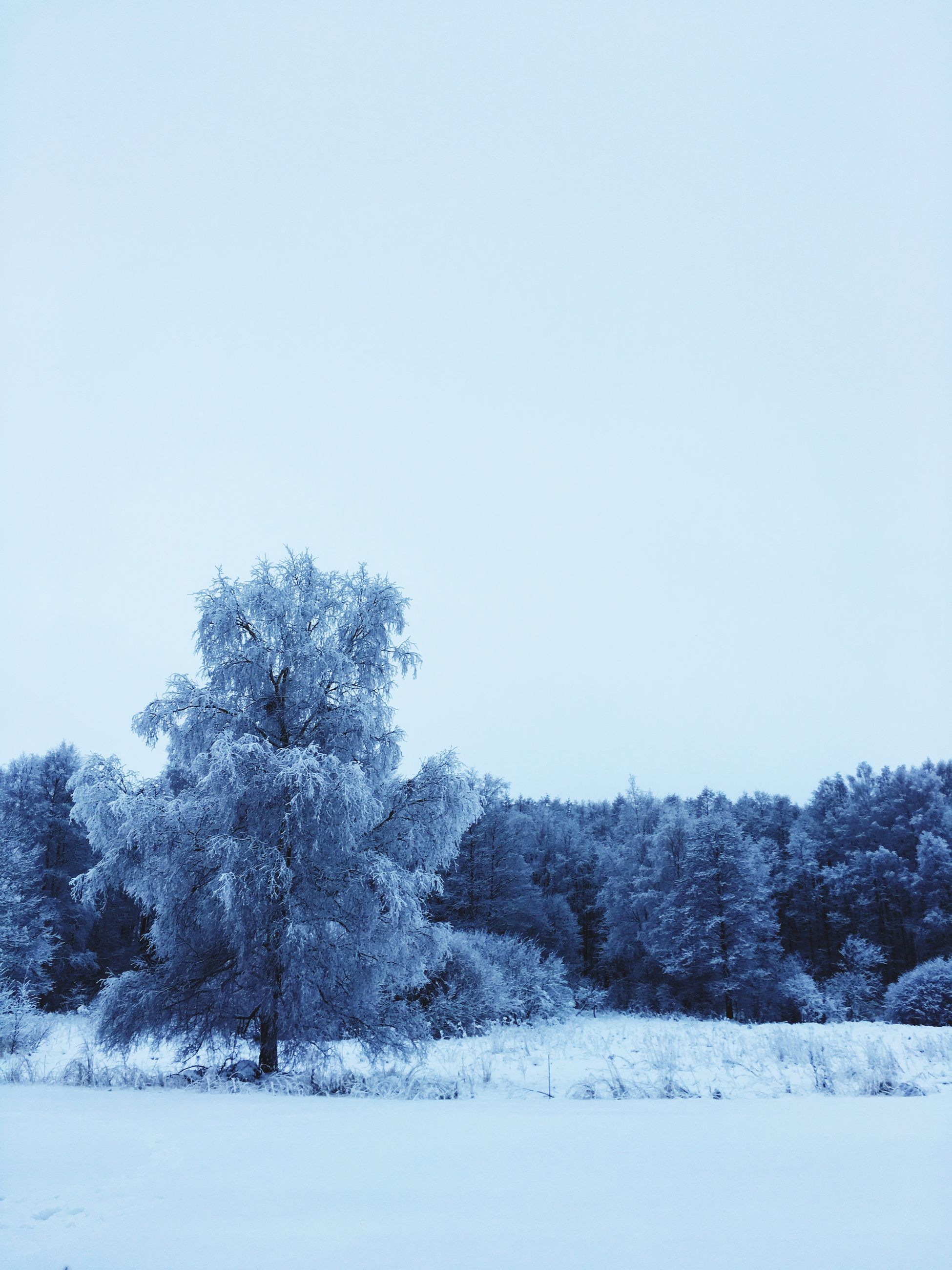snow, winter, cold temperature, clear sky, season, tree, tranquil scene, copy space, tranquility, landscape, weather, beauty in nature, scenics, covering, nature, white color, field, non-urban scene, frozen, snow covered