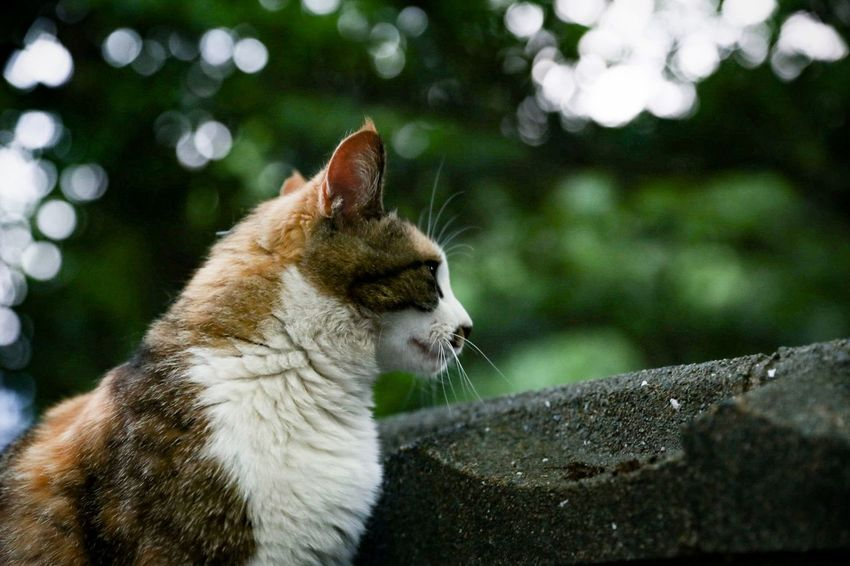 Animal Eye Animal Wildlife Cute Cat Cat Photography Cat Watching Canon 6D