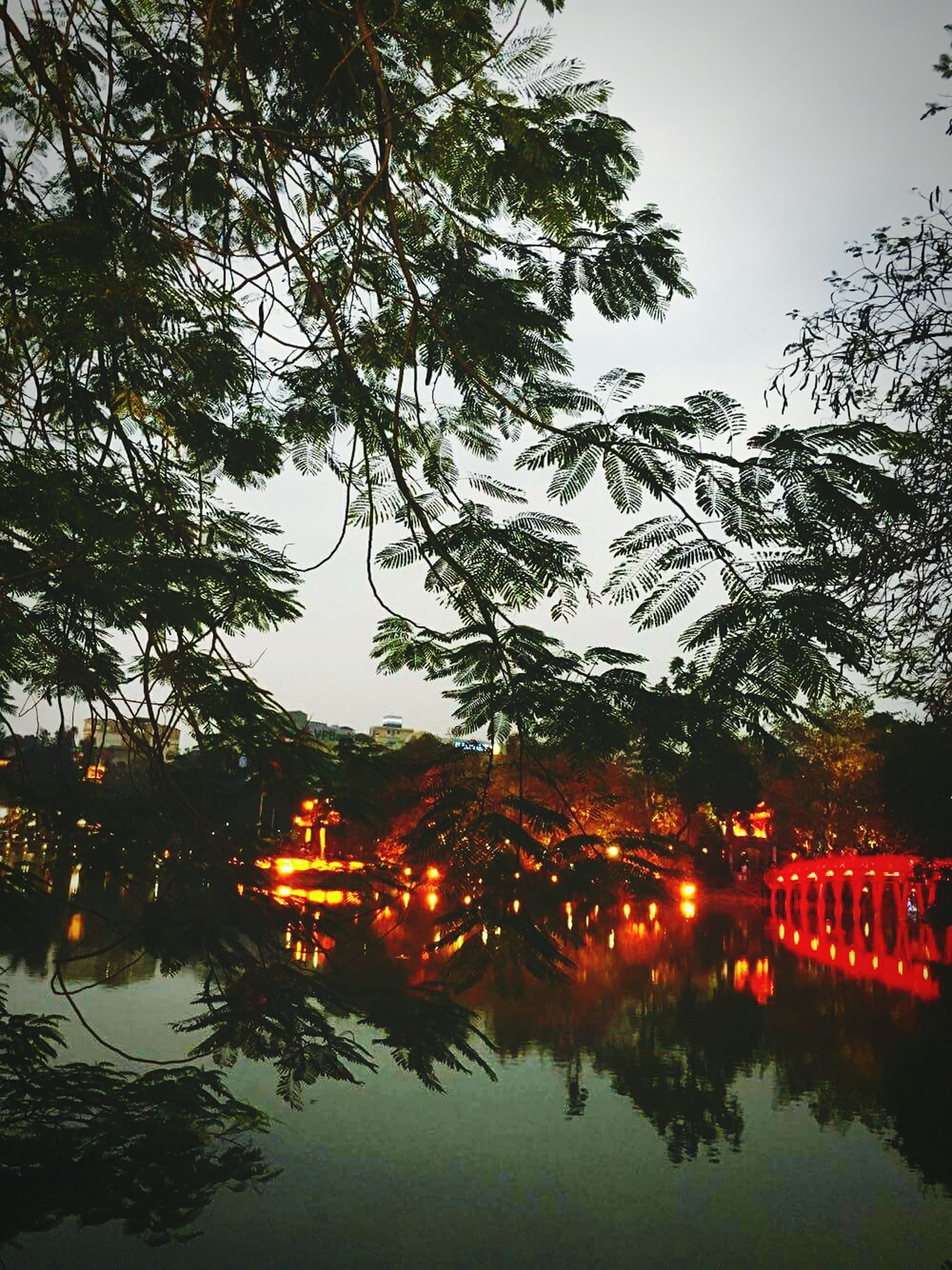 tree, reflection, water, nature, outdoors, growth, no people, sky, waterfront, illuminated, branch, beauty in nature, lake, scenics, night