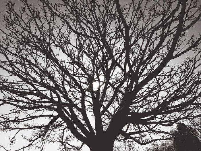 Sunset Trees Nature Blackandwhite