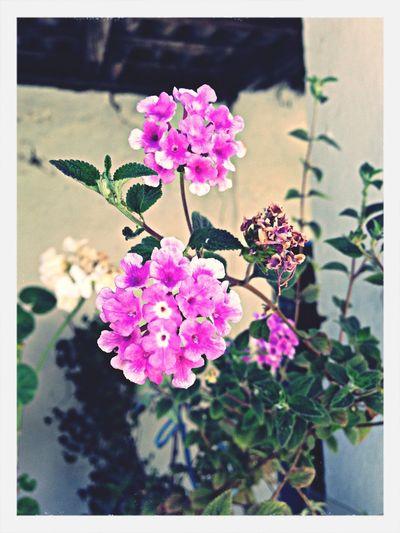 Flores Flowers