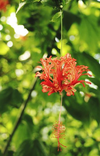 Flower Plant Orange Color Green Color Blooming Trees Green Flowers