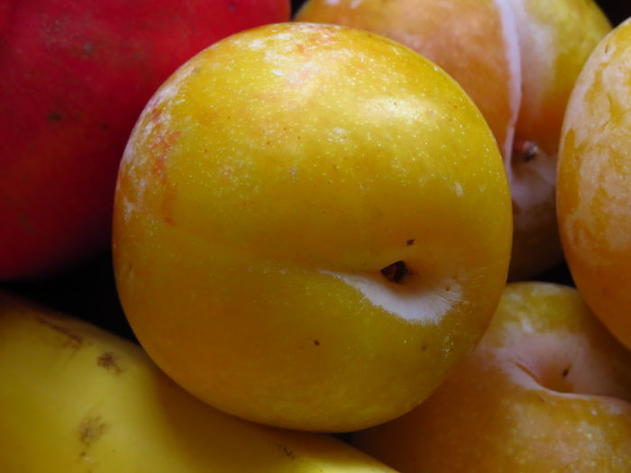 Nectarine Plums StillLife StillLifePhotography Close-up Focus On Foreground Food Food And Drink Freshness Fruit Fruit Photography Fruitporn Fruits Full Frame Healthy Eating Mirabelle Plum Prune Ripe Ripe Fruit Still Life Wellbeing Yellow Yellow Fruit Yellow Plums