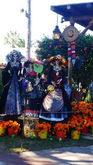 Dia De Los Muertos Day Of The Dead November 2nd Catrinas Brilliant Colors Colors Bright Colors Marigolds Orange Marigolds Old Town San Diego San Diego California