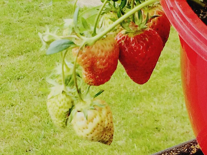 Eat me ! Red