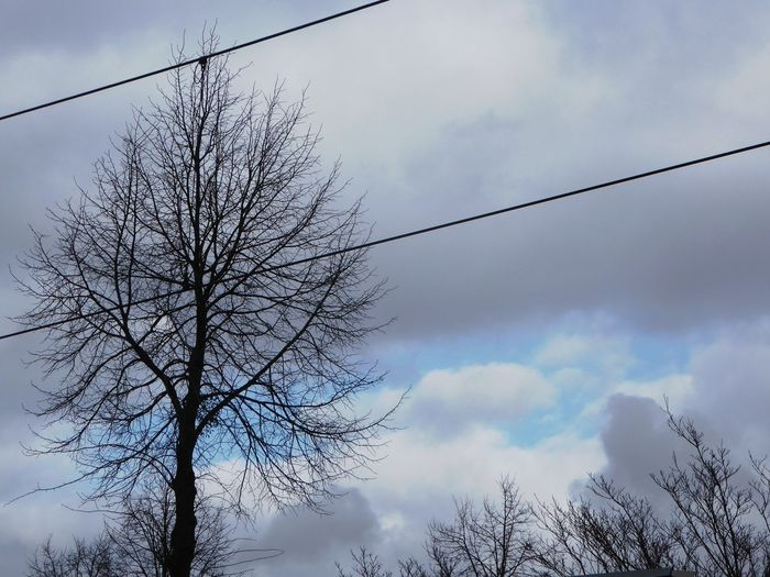 Blue Sky Whereever I Go😁 Have A Nice Day! ☀ Cloud - Sky Nature No People Beauty In Nature Beauty In Winter😍 For My Friends 😍😘🎁 Enjoying Life Bare Tree Branch