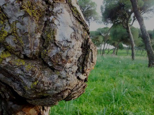 Nature Alcalá De Guadaira Sevilla