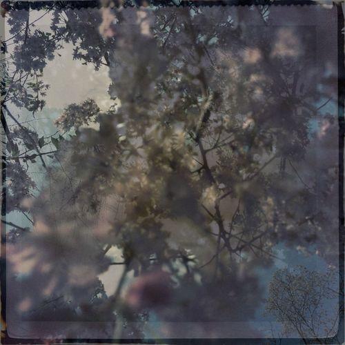 #sakura Petals Flutter