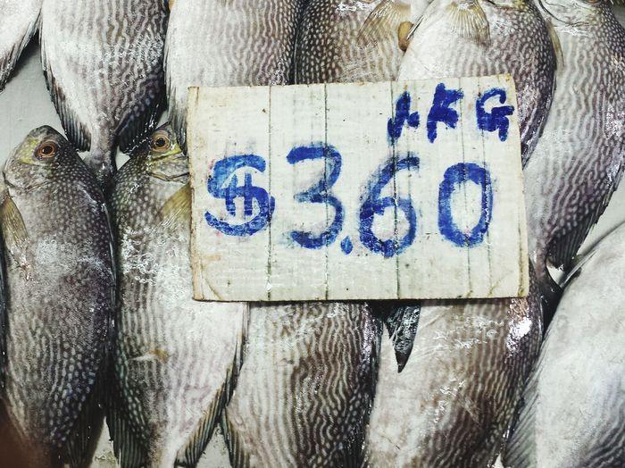 Precision Fish