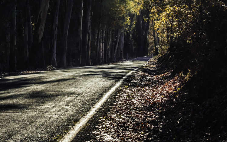 Highway crossing the forest Asphalt Autumn Day Fall Forest Forest Photography Forestwalk Highway Leaves Nature No People Outdoors Road The Way Forward Tree