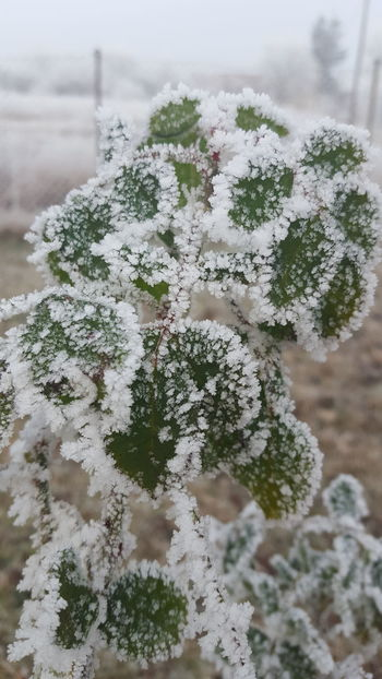 Snow Winter Close-up Cold Temperature Nature Beauty In Nature White Cold Winter Freezing Cold Hoary Winter_collection Cold Winter ❄⛄ White Color Rime On Tree Hoar Frost Frosty Mornings Frosty Hoarfrost Forest Rime Freezing Cold Days Icecold Hoarding