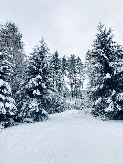 Wintertime Snow Tree Cold Temperature Winter Plant Sky Nature No People Land White Color Tranquility Field Day Covering Environment Scenics - Nature Beauty In Nature Growth Frozen Coniferous Tree