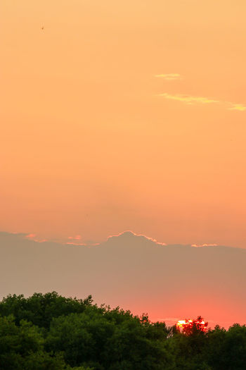 Scenic view of silhouette trees against orange sky