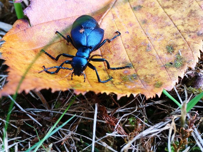 Wildlife & Nature Animals In The Wild Animal Themes Wildlife Insect Close-up Blue Nature Focus On Foreground Fragility Outdoors Day No People Zoology Beauty In Nature Two Insects Animal Behavior Leaf Maximum Closeness