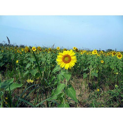 Photography KimberlyElle Nature Flowers