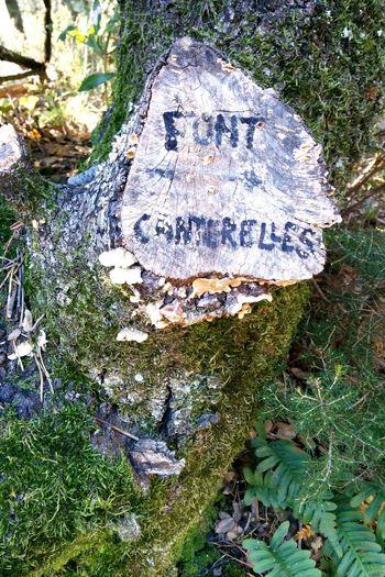 Font Cantelleres Sant Llorenç Del Munt Vallès