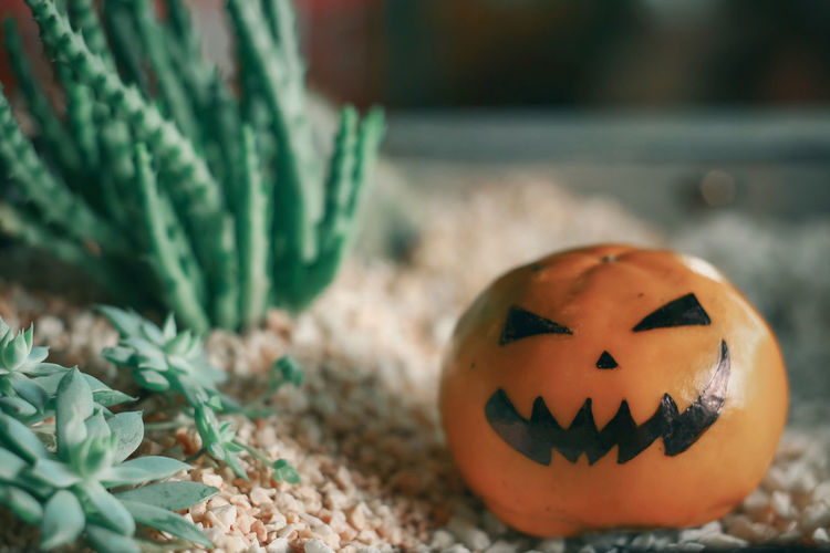 Close-up of pumpkin against blurred background