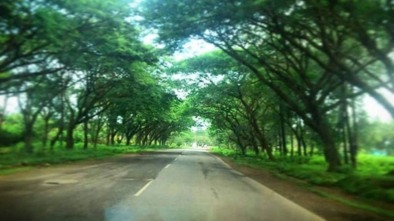 Landscapes With WhiteWall UrbanSpringFever Greenery Road Trip Journey