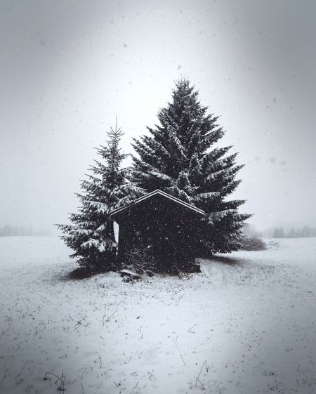 Do you like snow ? Snow Winter Cold Temperature Tree Nature Weather Beauty In Nature Tranquil Scene Day Outdoors Covering No People Tranquility Landscape Scenics Frozen Spruce Tree Cold Snowing Sky