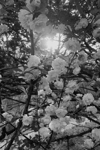 En el patio de tu casa / in the patio of your home Black And White Flowers Blooming Colors Sunlight La Vida Es Bella