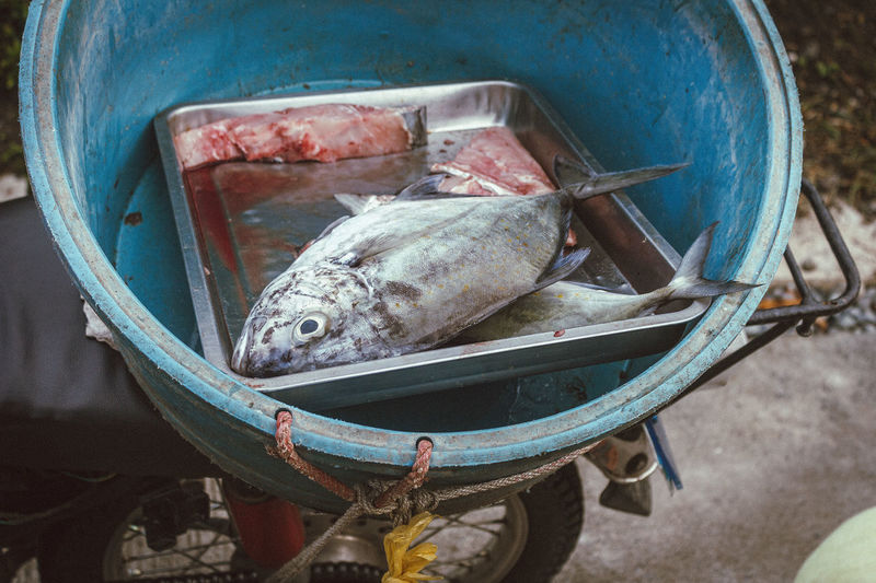 High angle view of fish in bucket on motorcycle