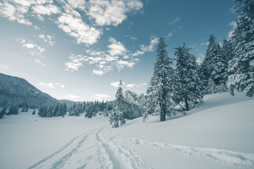 Beauty In Nature Cloud - Sky Cold Temperature Coniferous Tree Covering Day Environment Land Mountain Peak Nature No People Non-urban Scene Plant Scenics - Nature Sky Snow Snowcapped Mountain Tranquil Scene Tranquility Tree White Color Winter