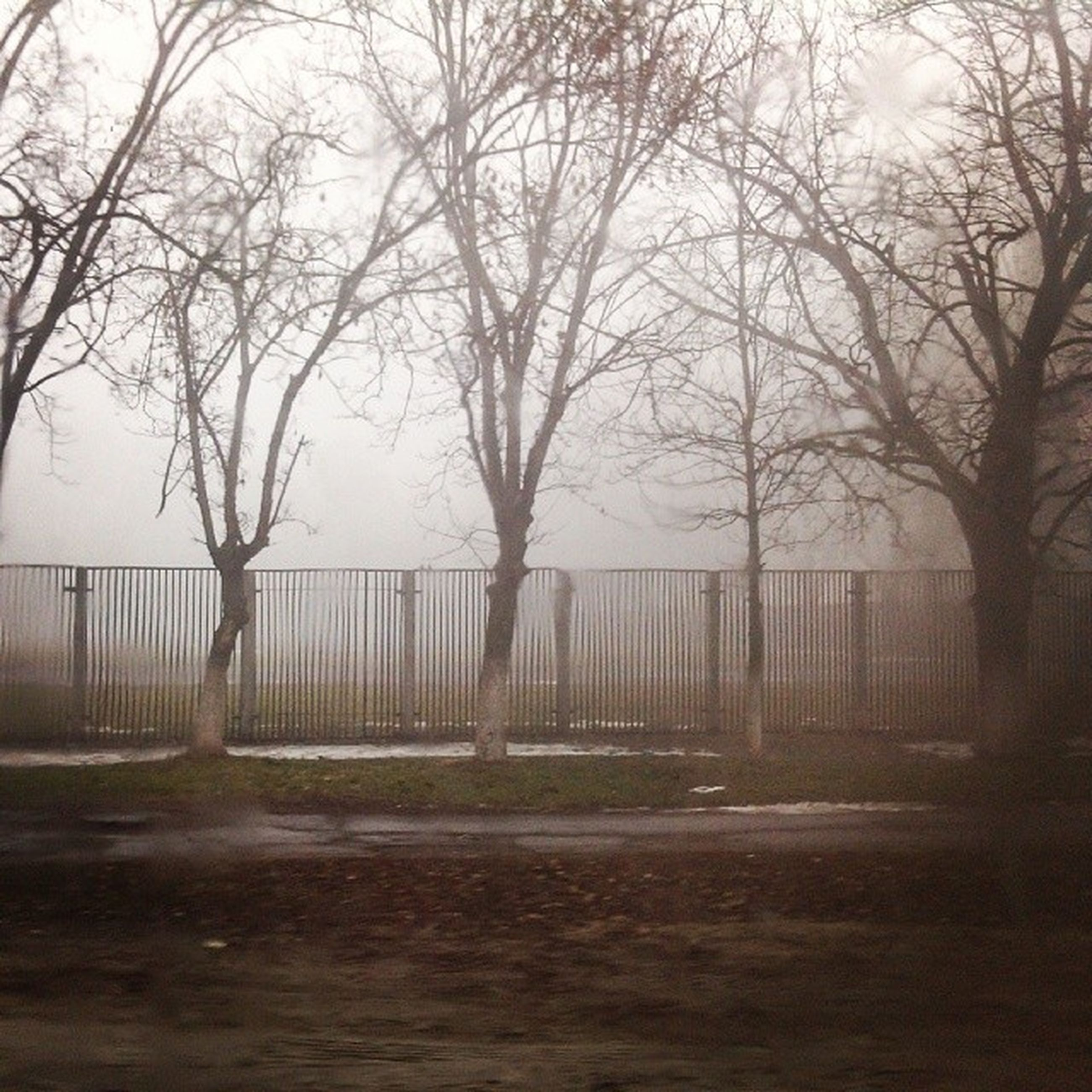 bare tree, tree, tranquility, branch, tranquil scene, water, nature, scenics, beauty in nature, sky, tree trunk, silhouette, landscape, fog, lake, fence, outdoors, day, non-urban scene, idyllic