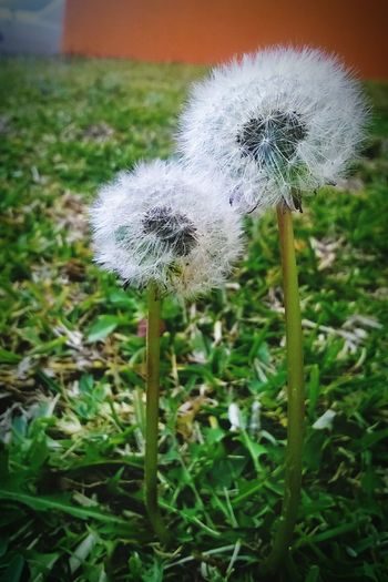 You & me Flower Nature Growth Plant Fragility Beauty In Nature Close-up No People Outdoors Softness Freshness Flower Head Field Day Grass Love Couple You & Me You & I Lovers