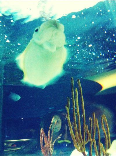 Cuddlefish