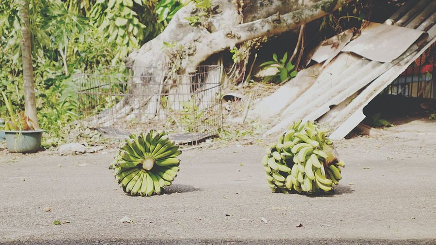 Bunch of bananas for sale at market