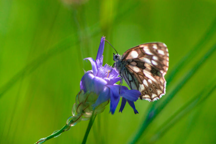 Close-up of butterfly on purple flower