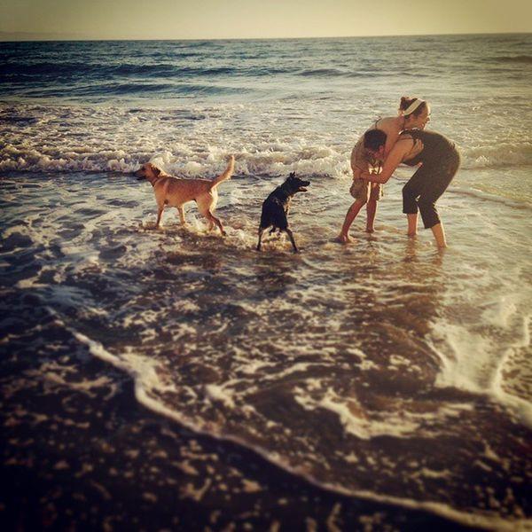 Autumn, on the central coast. Wrestlemania Beach Westcoastbestcoast Autumn fall centralcoast californialife acd yellowlab cattledog love @mfischer047