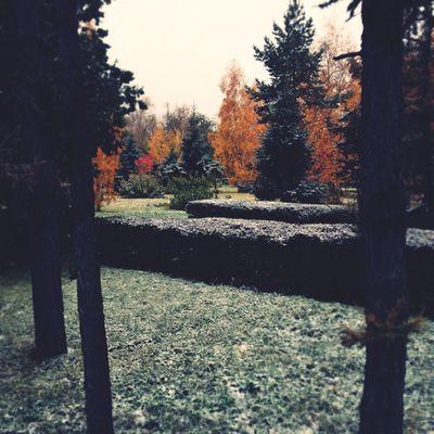 Omsk Autumn осень Relaxing