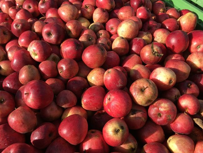 Ocean Of Apples Container Fruits Fruits Fruit Red Apple Cider Apple Fruit Apple Picking Apples Apple Fruit Healthy Eating Food And Drink Food Freshness Red Full Frame Apple - Fruit Large Group Of Objects Backgrounds No People Agriculture Nature