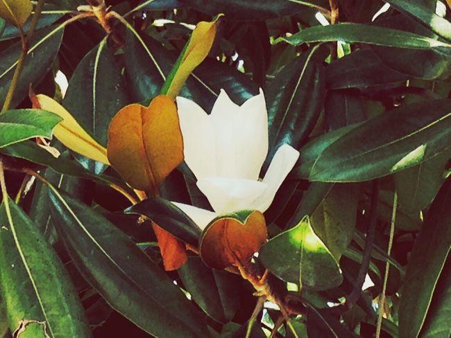 Flowers in Adler)))