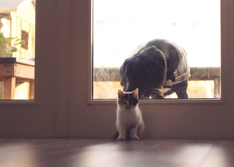 Funny Play Scotland Cats Of EyeEm Ball Cat Lovers Mammal Pets Domestic Domestic Animals Animal Themes Animal Dog Window No People Home Interior Glass - Material Day Indoors