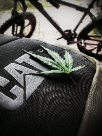 Smoke weed everyday 🚬🚬