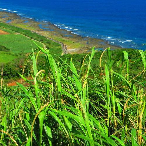 Isolated Island Kume Island Observatory OKINAWA, JAPAN Sea And Sky Sugarcane Sunny Day Wonderful Place