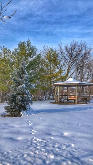 Winter scene Blue Sky Nature Photography EyeEm Nature Lover Horizon Over Land Tree Plant Winter Cold Temperature Snow Nature Sky Architecture No People Day Built Structure Cloud - Sky Outdoors Beauty In Nature Building Exterior Tranquility Water Sunlight Scenics - Nature