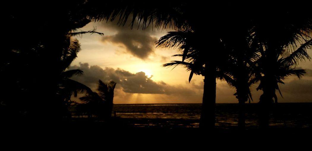 The Traveler - 2019 EyeEm Awards Tree Palm Tree Sunset Power In Nature Silhouette Sky
