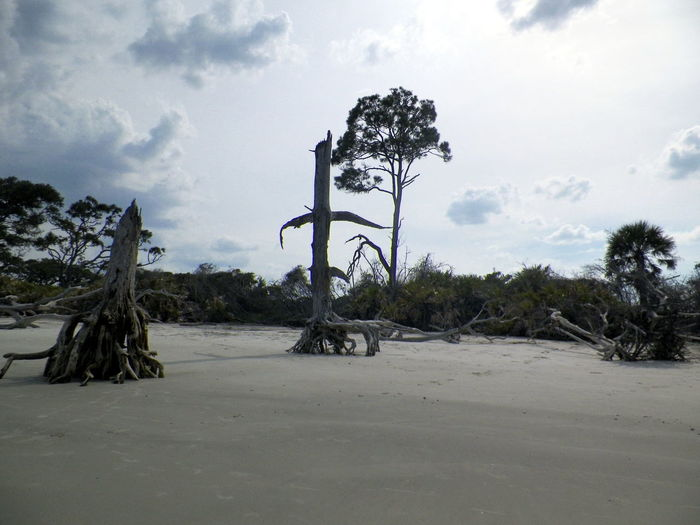 Beach Beauty In Nature Cloud Cloudy Cross Day Growth Jekyll Island Landscape Nature Non-urban Scene Outdoors Palm Tree Sand Scenics Sky Tranquil Scene Tranquility Transportation Tree
