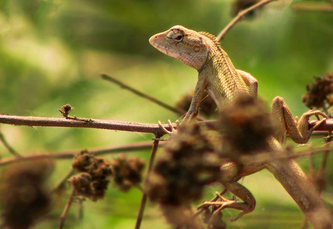 First Eyeem Photo Garden Lizard Lizard Love
