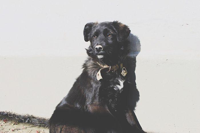 Vilkovo OpenEdit Dog Dog Portrait