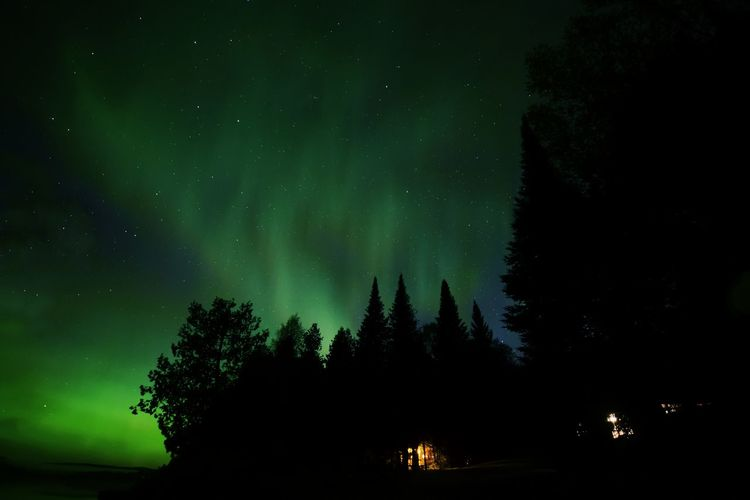 The Great Outdoors - 2017 EyeEm Awards Night Tree Star - Space Pinaceae Forest Camping Illuminated Silhouette Astronomy Pine Tree Beauty In Nature Constellation Nature Outdoors Northern Lights Aurora Borealis Aurores Boréales Nikond7200 Artofvisuals Nikonphotography Artoflife Quebec Canada The Great North Lost In The Landscape HUAWEI Photo Award: After Dark