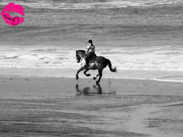 Blackandwhite Beach EyeEmbestshots Horse